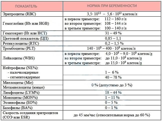 Расшифровка общего анализа крови в норме в беременность